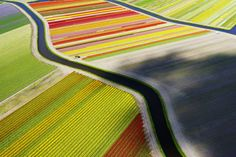 Photo and caption by Anders Andersson / National Geographic Traveler Photo Contest A bird´s view of tulip fields near Voorhout in the Netherlands, photographed with a drone in April 2015