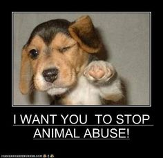 stop animal abuse | WANT YOU TO STOP ANIMAL ABUSE!