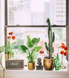 Stumbled across this gorgeous vignette on @sfgirlbybay's site while collecting ideas for our entryway (it makes me cringe every time I open the door). What do you guys think? Too many plants? Not enough?