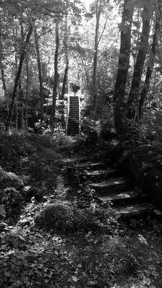 Trapp i skogen