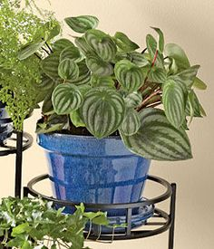 Make a Home for Houseplants: Gardener's Supply