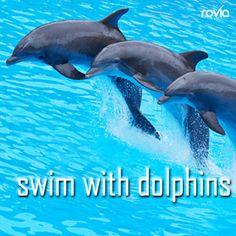 swim with dolphins #bucketlist #rovia. Next week in Mexico CANT WAIT !!!