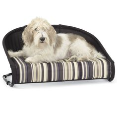 Gen7pets Casual Cot Cat Dog Bed Raised Pet Bed