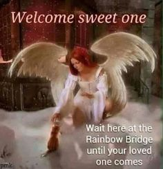 WELCOME sweet one ~ Wait here at the Rainbow Bridge until your loved one comes.