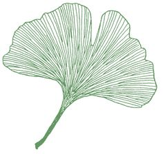 Ginkgo- strength, hope, resilience