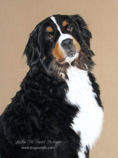 Pastel Portrait of a Bernese Mountain Dog