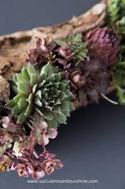 Resultado de imagen para Succulents in driftwood