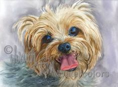 "Yorkshire Terrier, Yorkie, AKC Toy, Pet Portrait Dog Art Watercolor Painting Print Picture, Wall Art, Home Decor, ""Clancy"" Judith Stein #yorkshireterrier"