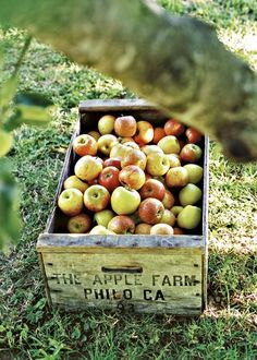 I can't wait to go apple picking!!