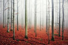 15exquisitely mystical forests which will enchant your soul