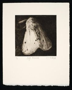 Copper drypoint engraving x Edition of Sarah Gillespie Drypoint Etching, Still Life Artists, Etching Prints, Galerie D'art, Modern Art Prints, Collage, Art Plastique, Printmaking, Graphic Art