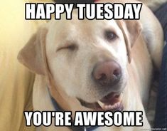 Cute Dog Tuesday Meme #Memes #TuesdayMemes #FunnyMemes #Tuesdays #ItsOnlyTuesdayMemes #TacoTuesdayMemes #HappyTuesdayMemes #TuesdayMorningMemes