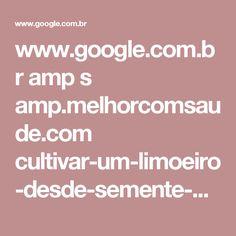 www.google.com.br amp s amp.melhorcomsaude.com cultivar-um-limoeiro-desde-semente-casa