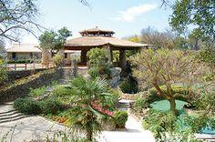 One of my favorite places to visit... San Antonio Japanese Tea Garden