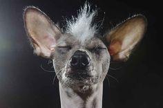 Estos cachorros sin pelo son las estrellas de una nueva y reveladora sesión de fotos