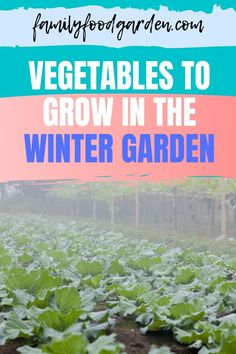 Wondering what are the vegetables to grow in the winter garden? The winter vegetable garden means growing the right winter crops. The right winter vegetables are ones that can handle that freezing and thawing that happens frequently. Check this pin for full guide! #wintergarden #wintervegetables #gardening Healthy Fruits And Vegetables, List Of Vegetables, Winter Vegetables, Organic Vegetables, Growing Vegetables, Growing Plants, Container Gardening, Gardening Tips, Vegetable Gardening