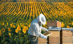 Paris Farmers Union : How to Start a Beekeeping Business and Create a Bu. Drone Bee, Creating A Business Plan, Natural Pesticides, Bee Farm, Thing 1, Blooming Plants, Save The Bees, Paris, Bee Keeping