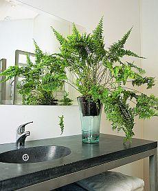 Planten voor in de badkamer Groen.net - uw online tuinman