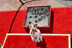 'The Artist' Star Uggie Casts His Paw Prints at Grauman's