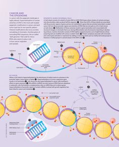 Cancer and the epigenome - good for middle school or high school workshop