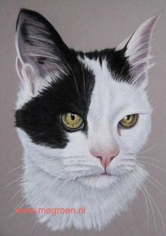Made with pastel on Canson Mi Teintes. size Oriental shorthair cat with Spider drawing. Spider Drawing, Oriental Shorthair Cats, Graphite Drawings, Pastel Drawing, Cat Face, Lady, Faces, Artists, Black Cats