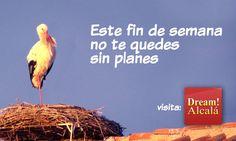 Qué hacer este fin de semana en Alcalá de Henares - http://www.dream-alcala.com/que-hacer-este-fin-de-semana-en-alcala-de-henares/
