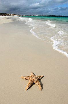 Starfish on a remote beach.