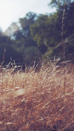Patrick Cole Nature Grass Field   #iPhone #6 #plus#wallpaper
