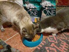 Day by day: PURINA ONE® BIFENSIS - pentru pisicuță sănătoase și frumoase Dogs, Animals, Animales, Animaux, Doggies, Animal, Pet Dogs, Animais, Dog