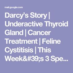 Darcy's Story | Underactive Thyroid Gland | Cancer Treatment | Feline Cystitisis | This Week's 3 Specials - kolkwicja1@gmail.com - Gmail