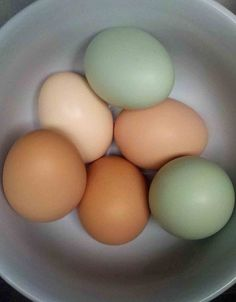 beautiful natural fresh chicken eggs - I'm hoping for colors like these from my flock!