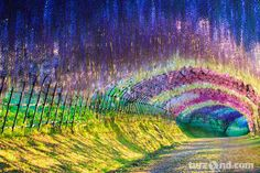 The eighth destination on the list is Japan with a visit to the spectacular wisteria tunnel located in the Kawachi Fuji Gardens Places To Travel, Places To See, Travel Destinations, Japan Guide, Vacation Spots, Dream Vacations, Vacation Ideas, Travel Inspiration, Travel Ideas