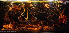 Leaf litter, its just natural - Triton Freshwater Aquatics