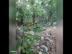 Εμπνεύσεις-Δημιουργίες-Μεταμορφώσεις: #φύση #nature Chios, Nature, Plants, Naturaleza, Plant, Nature Illustration, Off Grid, Planets, Natural