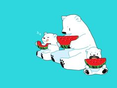 polar bears - water melons