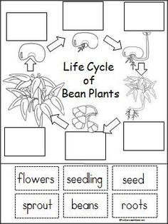 Free Plant Life Cycle Mini Book for Kindergarten and spring. This mini-book is the simple version of my Bean Plant Life Cycle series. First Grade Science, Kindergarten Science, Science Classroom, Teaching Science, Science For Kids, Kindergarten Preparation, Primary Science, Science Fun, Kindergarten Literacy