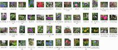 ガーデニング人気blogランキング ←1日1回押していただけるとと嬉しいです♪以前にご紹介済みなのを総集編にしてみました。 植えっぱなしでも毎年ちゃんと咲いて…
