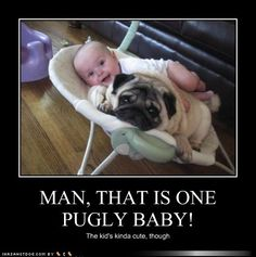 funny dog pictures - Pugly Baby