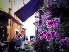 Twitter / @Kirsten Alana: wandering the narrower streets of Bologna