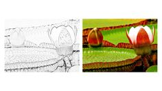 Amazon Lilly Zoo Animal Coloring Pages, Zoo Animals, Colored Pencils, Activities, Amazon, Colouring Pencils, Amazons, Riding Habit, Crayons