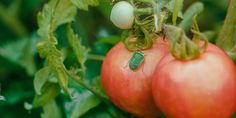 Vegetables, Nature, Plants, Food, Business, Kitchen, Recipes, Lawn And Garden, Naturaleza