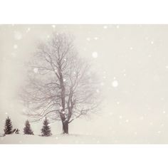 Snow Flurries - Winter Photography, Pale Ivory White, Trees, Woodland... ($15) ❤ liked on Polyvore