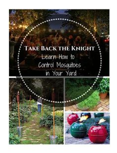 Learn how to control mosquitoes in your yard with mosquito prevention and management tips Mosquitoes, Garden Pests, Rodents, How To Get Rid