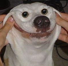 FunnyFacePics.com - Funny Dog Face
