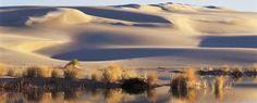 Sand Dunes near Florence, Oregon. Absolutely amazing, like something from Star Wars.