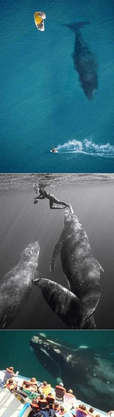 Swimming with humpback whales....AMAZING!