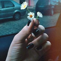 flowers, grunge, and black Bild