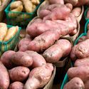 Sweet Potato: Planting, Growing, and Harvesting Sweet Potatoes