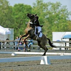 """""""Nice braids!"""" and other funny judge comments from dressage tests where a horse misbehaved.  My personal favorite: """"Either skip the lower levels and go straight to Grand Prix or give him two martinis before you enter the ring again!"""""""
