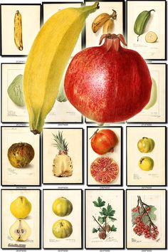 FRUITS VEGETABLES-29 Collection of 100 vintage images Banana Blueberry Chayote Papaya pictures High resolution digital download printable by ArtVintage1800s on Etsy